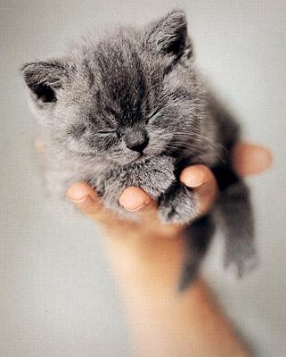 101 котомодель. С любовью к кошкам. Фотоальбом