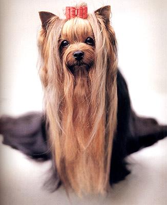 101 фотогерой. С любовью к собакам. Фотоальбом