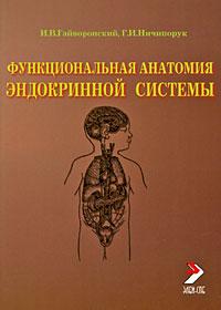 Функциональная анатомия эндокринной системы