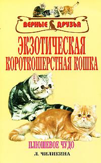 Л. Чиликина Экзотическая короткошерстная кошка