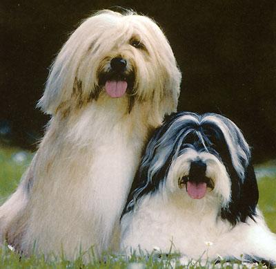 Собаки. 1001 фотография
