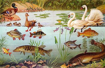 Добро пожаловать в экологию! Демонстрационные картины и динамические модели для занятий с детьми 5-6 лет (Старшая группа)