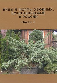 Виды и формы хвойных, культивируемые в России. Часть 1