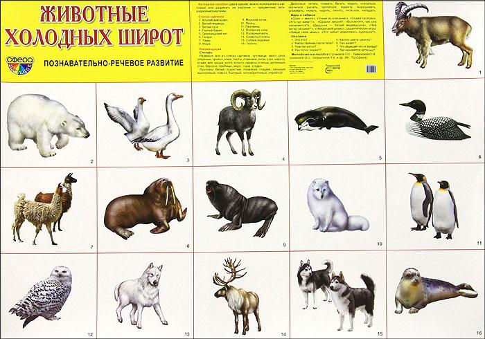 Животные холодных широт. Плакат