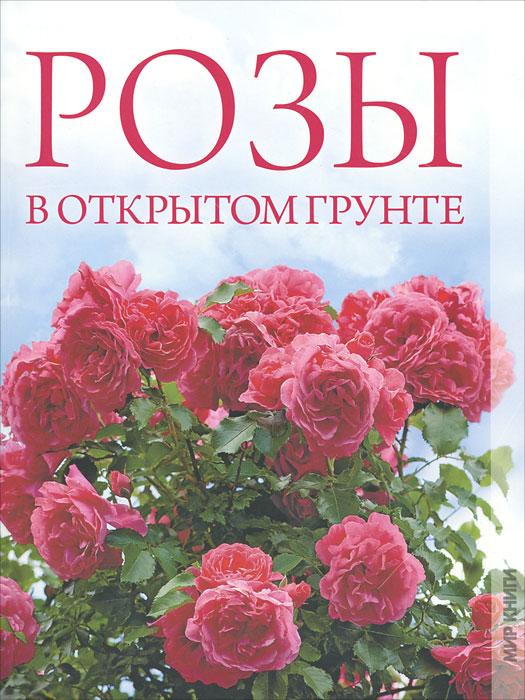 Розы в открытом грунте