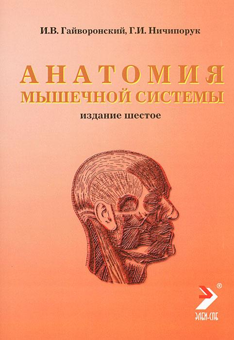 Анатомия мышечной системы