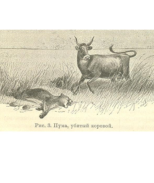 Натуралист в Ла-Плате