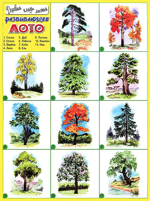Деревья, плоды, листья. Развивающее лото