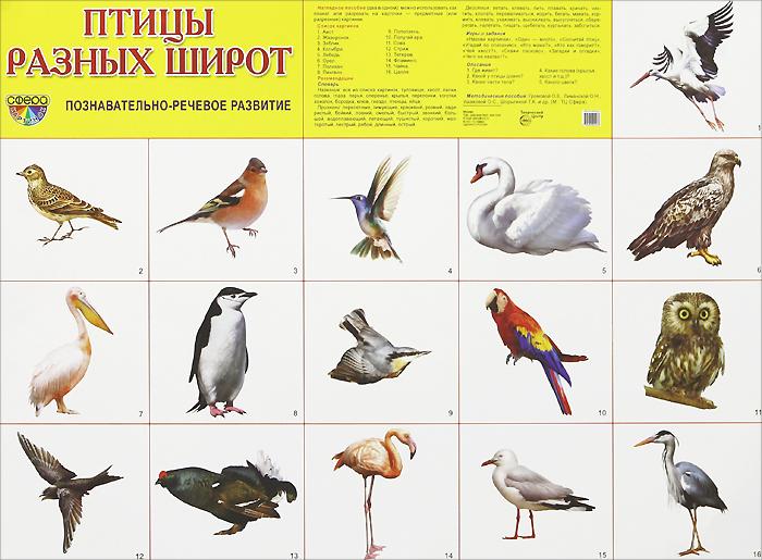 Птицы разных широт. Плакат