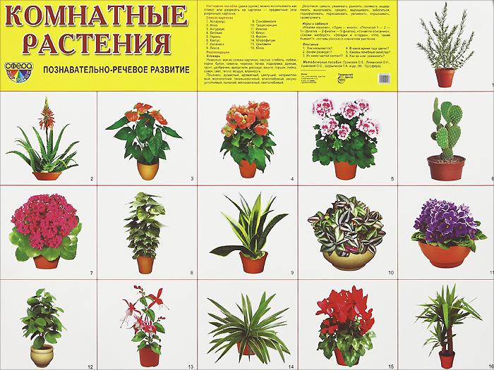 Комнатные растения. Плакат