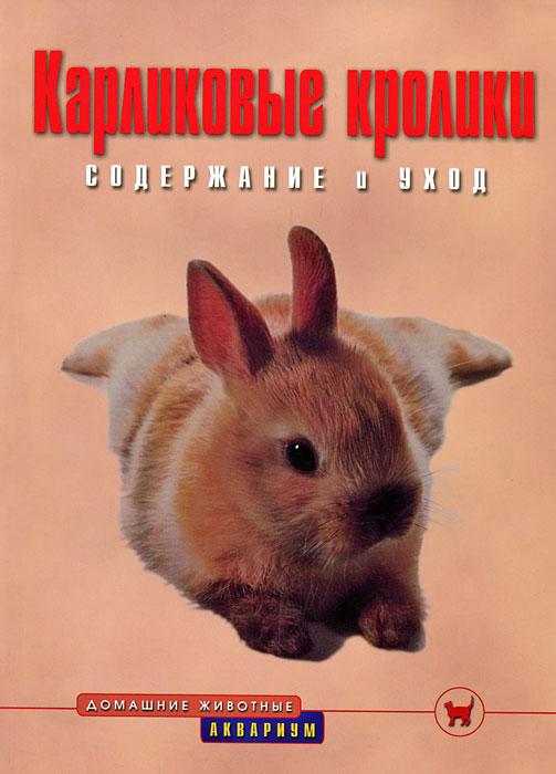Карликовые кролики. Содержание и уход