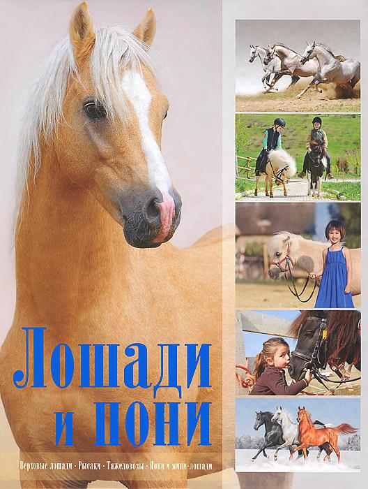 Лошади и пони ( 978-985-20-0168-7, 978-5-17-081307-0 )