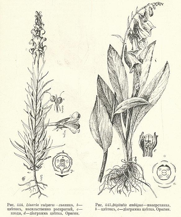 Общий курс Ботаники. Систематика растений