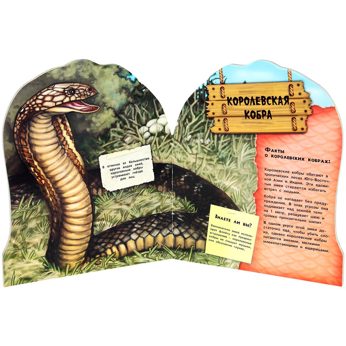 Дикие животные. Загадочные змеи!