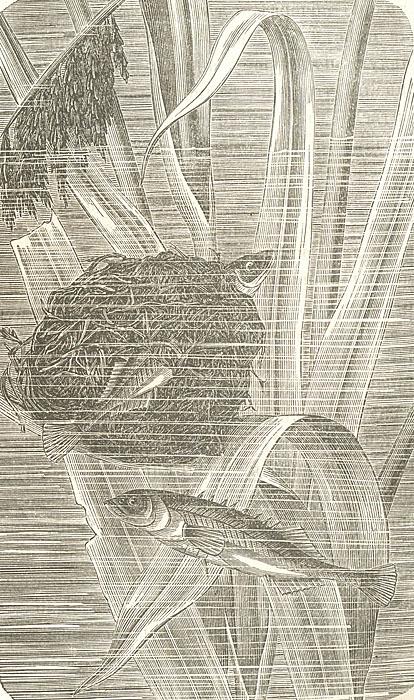 Аквариум любителя. Подробное описание флоры и фауны аквариума, устройства, ухода