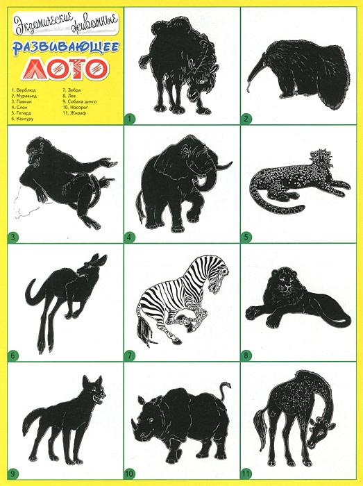Экзотические животные. Развивающее лото
