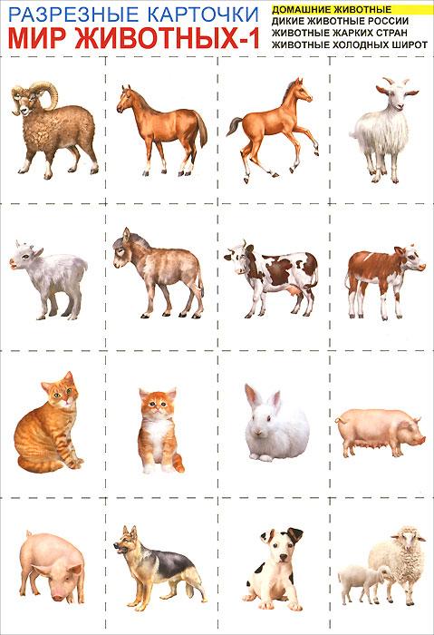 Мир животных-1. Разрезные карточки12296407В этом наглядном пособии рассматриваются такие темы как домашние животные, дикие животные России, животные жарких стран, животные холодных широт. На обратной стороне карточки представлено написание предмета печатными и прописными буквами. Яркие картинки помогут в игровой форме научится читать. На каждую тему пособие содержит по 16 карточек. Для занятий с детьми дошкольного и младшего школьного возраста.