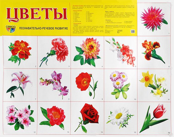 Цветы. Познавательно-речевое развитие. Плакат