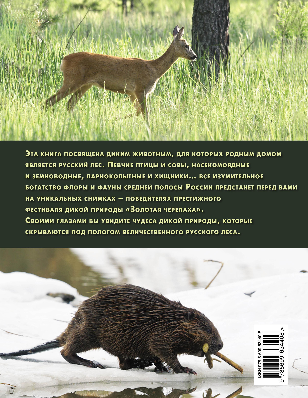 Дикие животные. Иллюстрированная энциклопедия обитателей средней полосы России