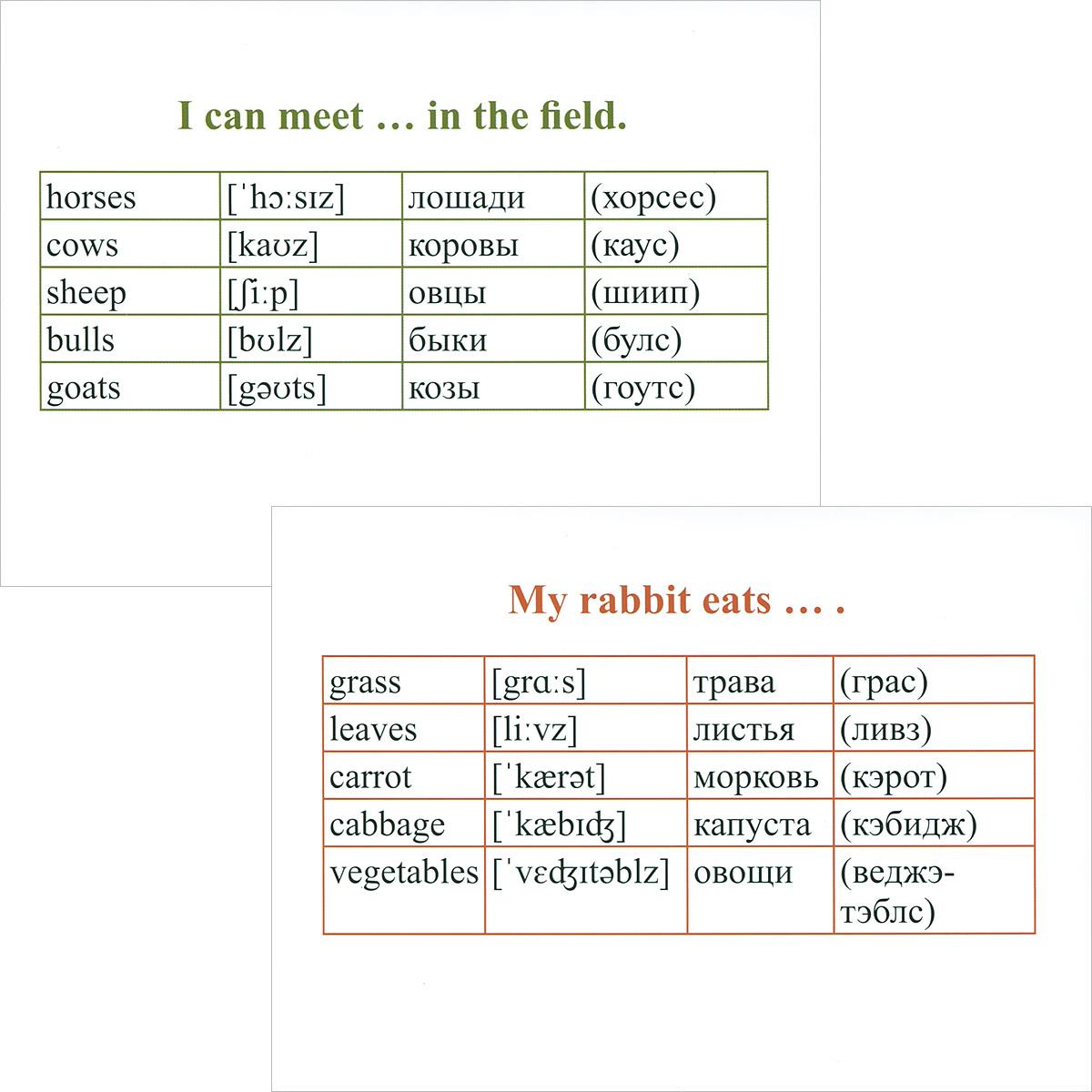 Английский язык. Мои первые слова и фразы (набор из 60 дидактических карточек)