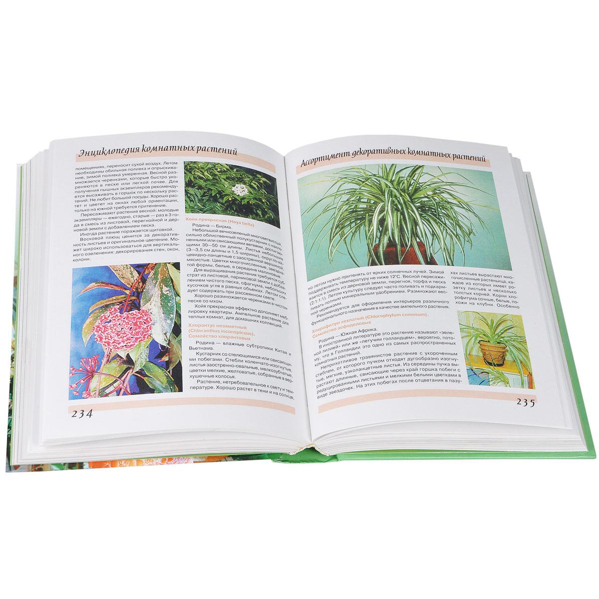 Цветы энциклопедия комнатных растений фото