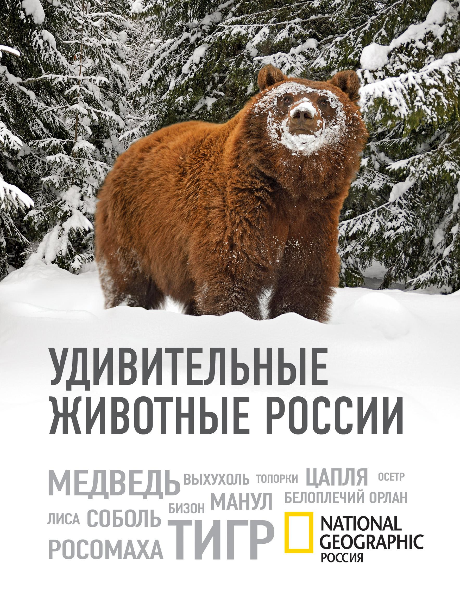 Удивительные животные России