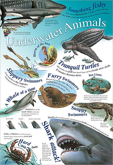 Underwater Animals. Плакат