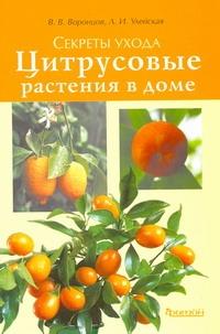 Цитрусовые растения в доме. Секреты ухода