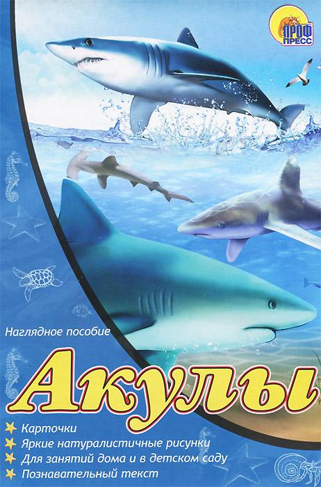 Акулы. Наглядное пособие