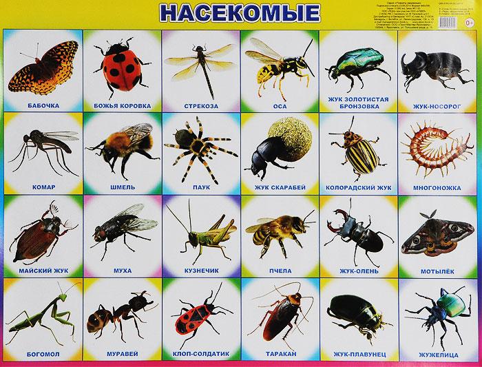 Насекомые виды и названия