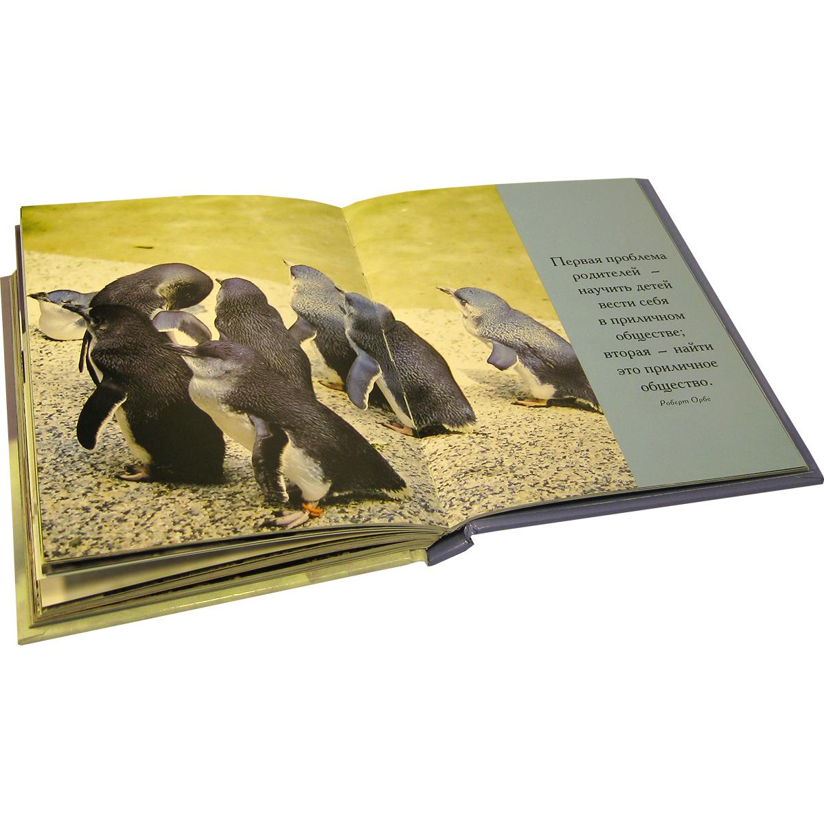 Глупый пингвин робко прячет, умный - смело достает!