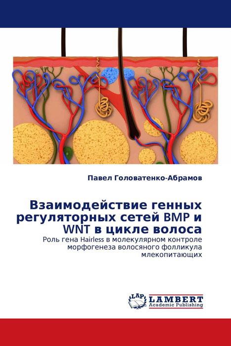 Взаимодействие генных регуляторных сетей BMP и WNT в цикле волоса