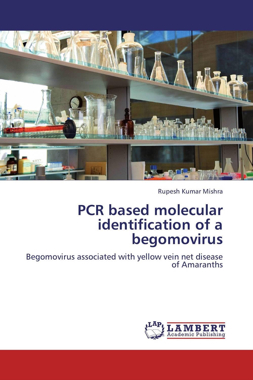 PCR based molecular identification of a begomovirus