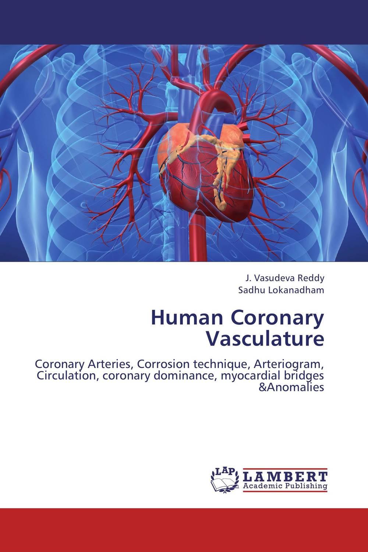 Human Coronary Vasculature