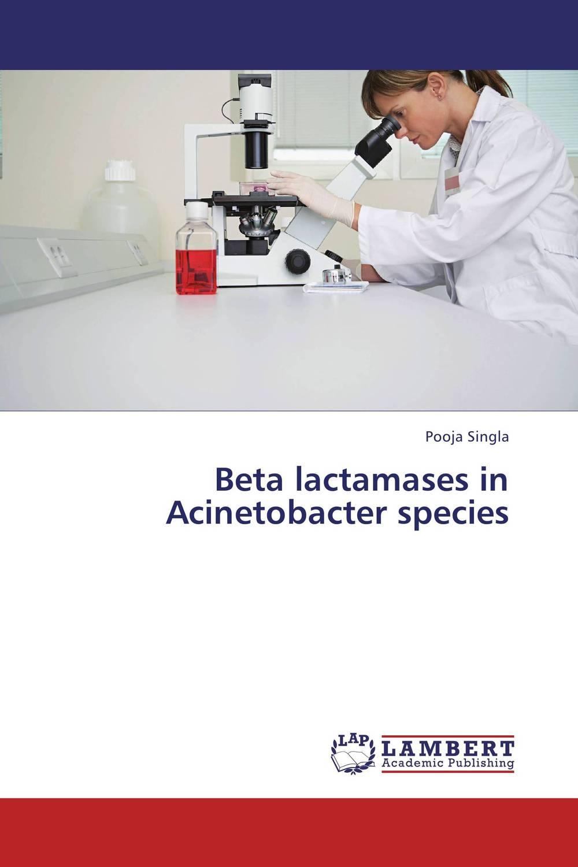 Beta lactamases in Acinetobacter species