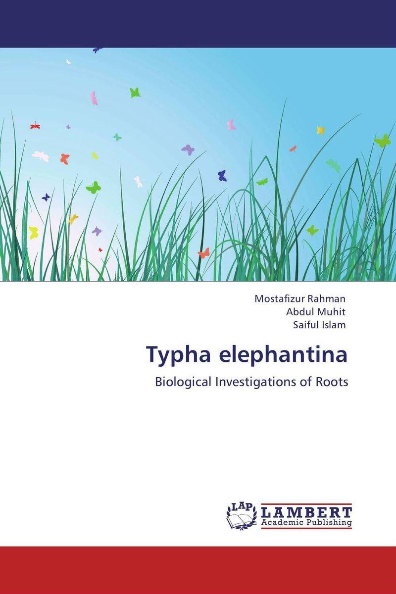 Typha elephantina