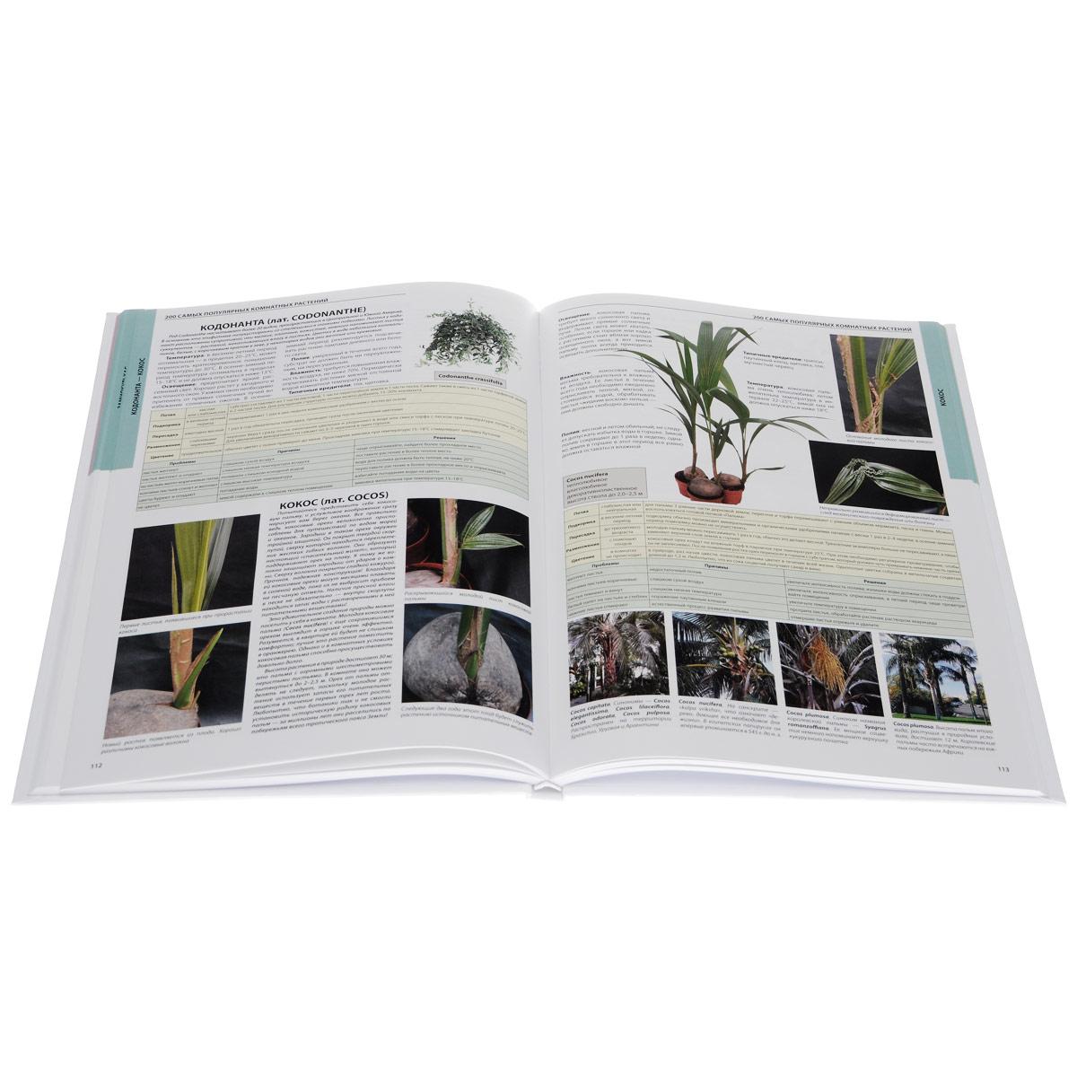 Комнатные растения. Особенности. Разведение. Уход