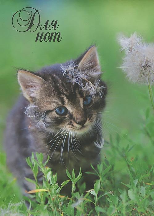 Нотная тетрадь. Котенок с одуванчиком