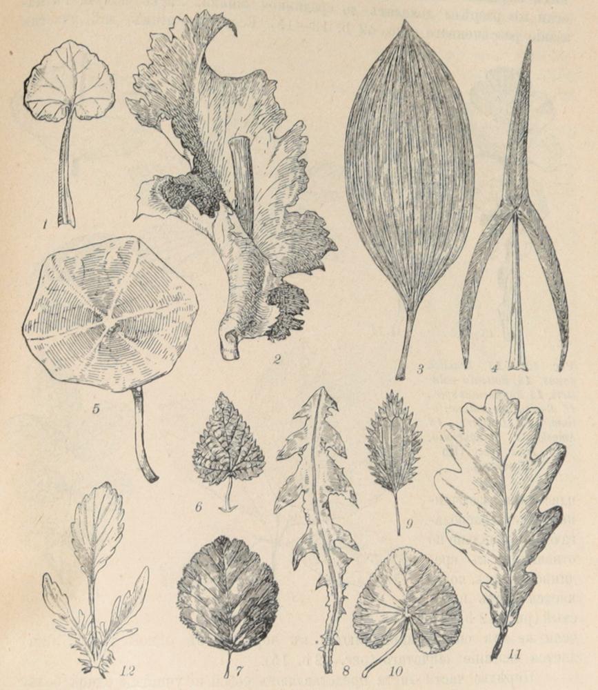 Общая ботаника