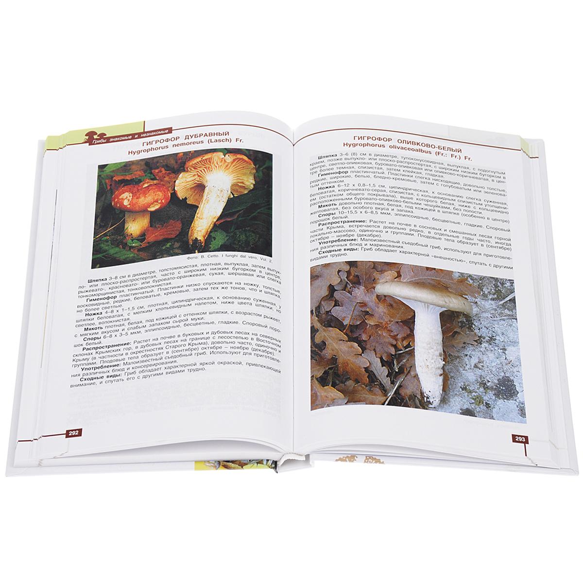 Грибы знакомые и незнакомые. Справочник-определитель грибов Крыма