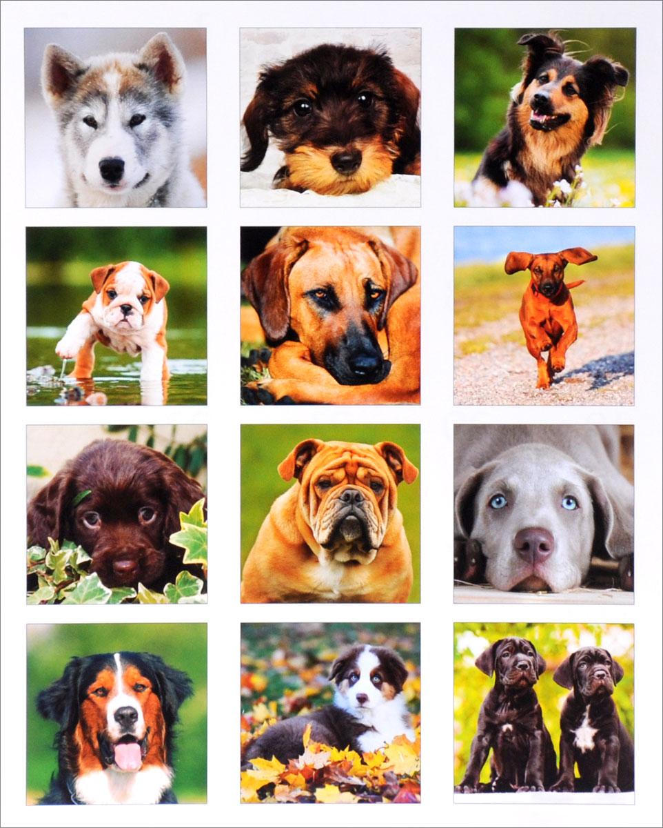 Календарь 2016 (на спирали). Dogs (+ наклейки)