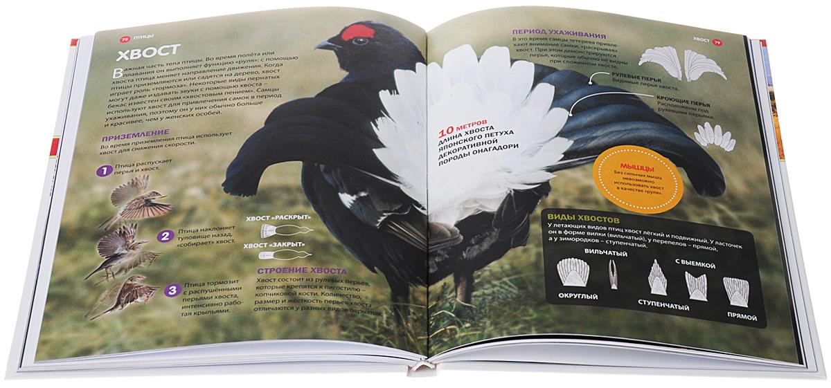 Млекопитающие и Птицы