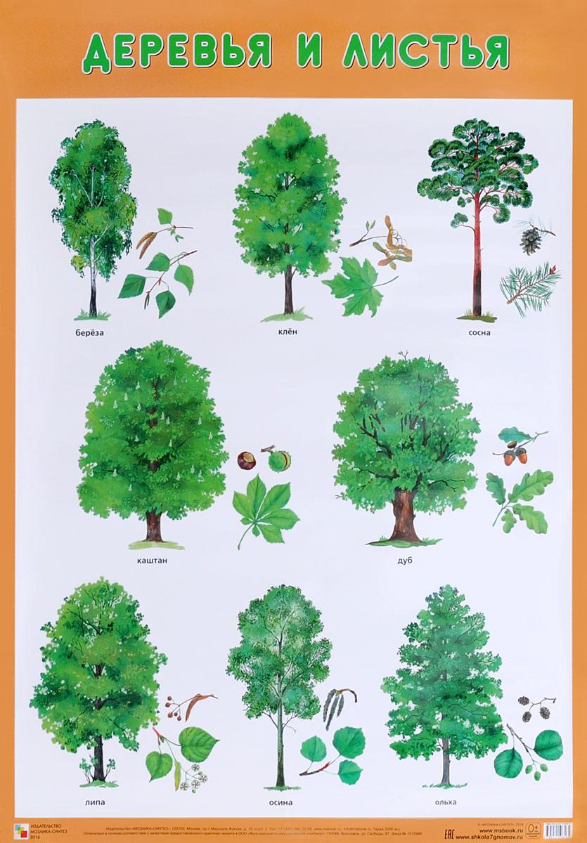 Деревья и листья. Плакат