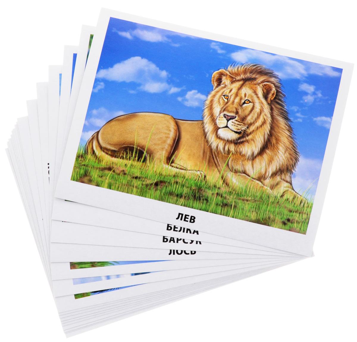 Млекопитающие (набор из 16 обучающих карточек)