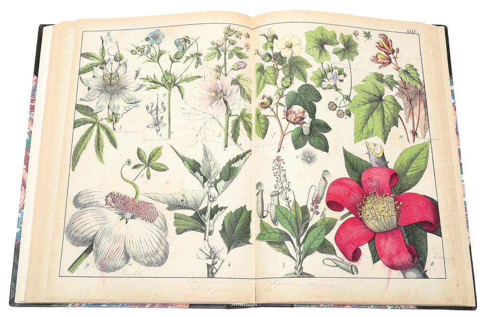 Ботанический атлас Шуберта, как вспомогательное дополнение ко всякому учебному руководству