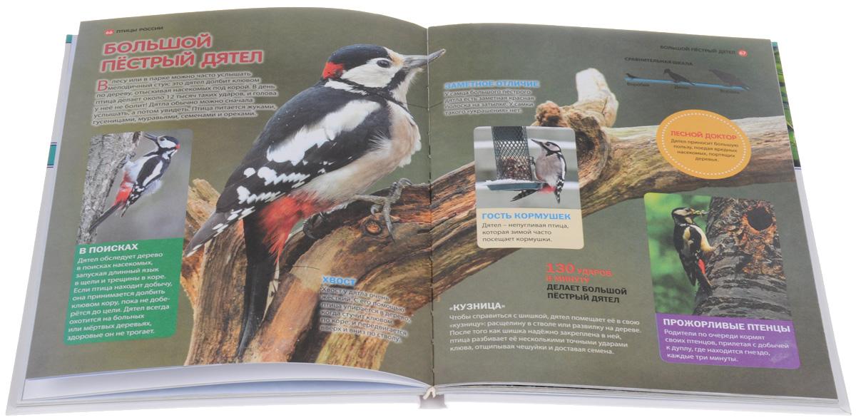 Животные и птицы России