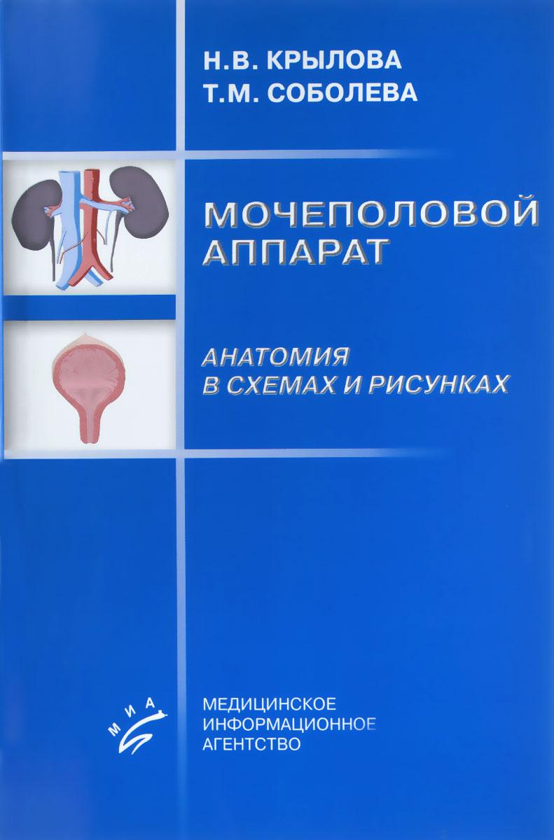 Мочеполовой аппарат. Анатомия в схемах и рисунках. Учебное пособие