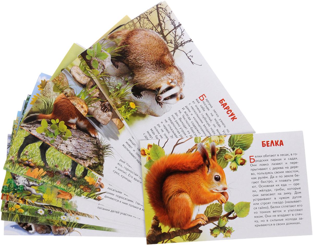 Животные России (набор из 16 карточек)