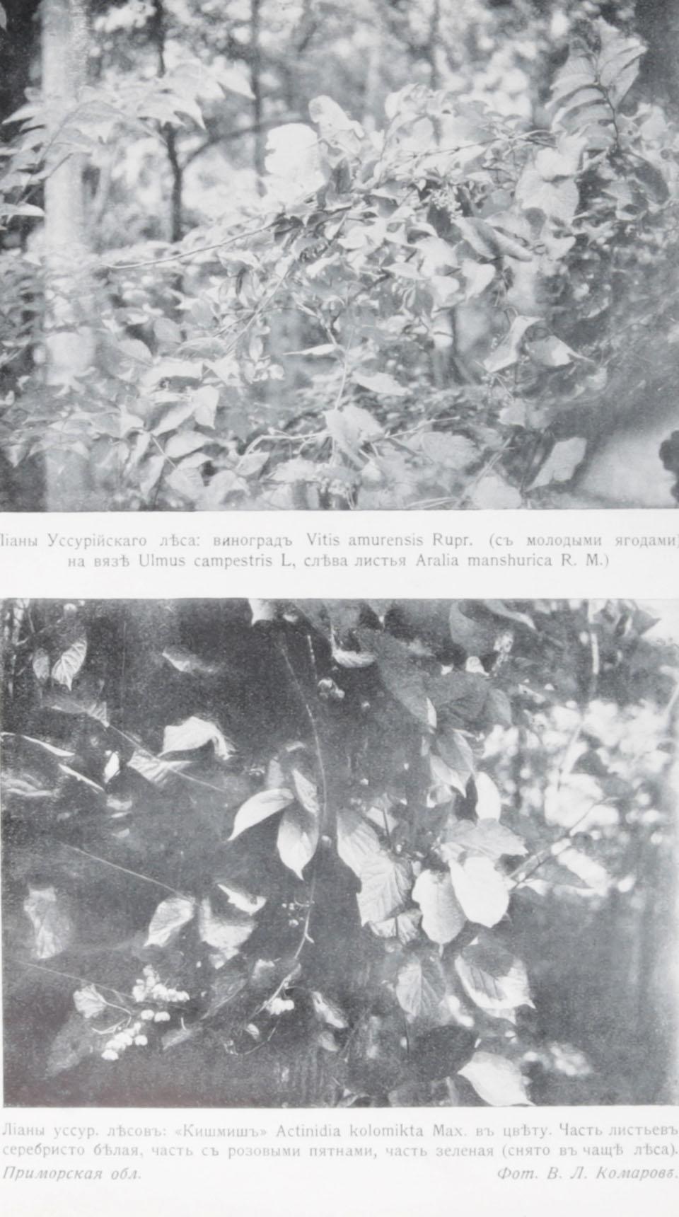 Предварительный отчет о ботанических исследованиях в Сибири и в Туркестане в 1913 году