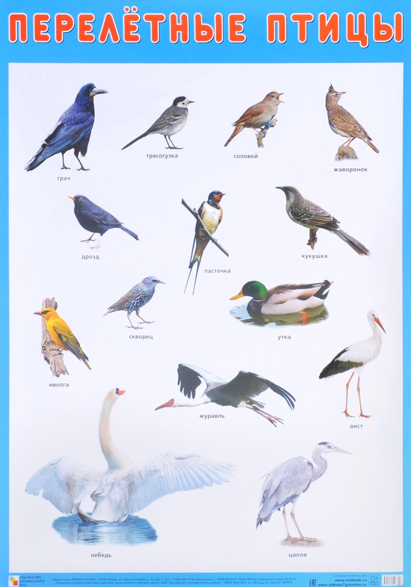 Перелётные птицы. Плакат